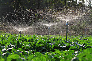 Irrigation Contractors Bloomington IL