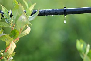 Drip Irrigation Systems Bloomington IL
