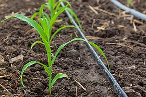 Drip Irrigation Systems Galesburg IL