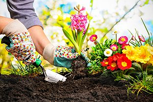 Garden Watering Systems Bloomington IL