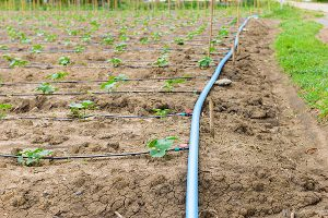 Drip Irrigation Systems Champaign IL