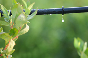Drip Irrigation Systems Urbana IL