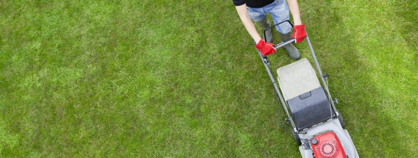 I Dream of Greenery: Keep Your Lawn Green All Season Long