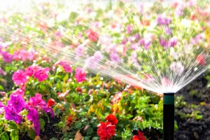 A sprinkler system watering flowers, installed by an Irrigation Company in Bloomington IL
