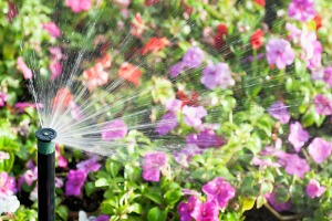 A Sprinkler System in Normal IL watering flowers